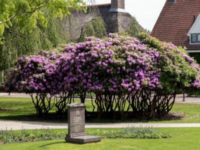 Metamorfose Van Reenenpark